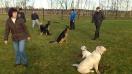 Hundeschule_10