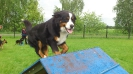Hundesport_53