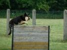 Hundesport_25